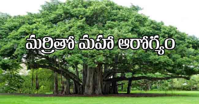 Medicinal Uses of Banyan Tree