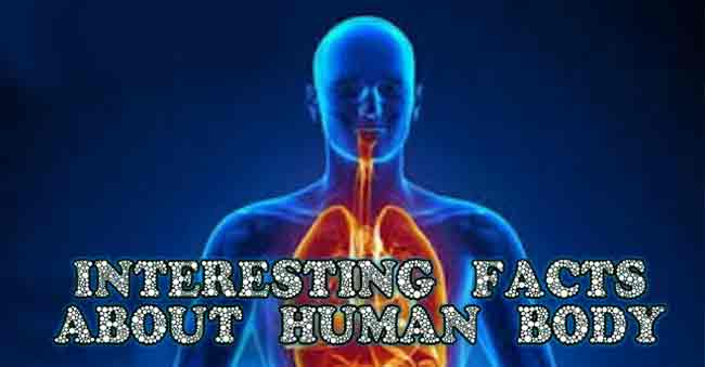 interesting facts about human behavior