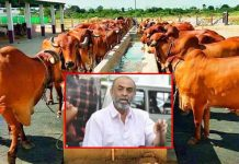 producer suresh babu into dairy business