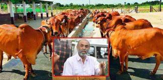 producer suresh babu into dairy business