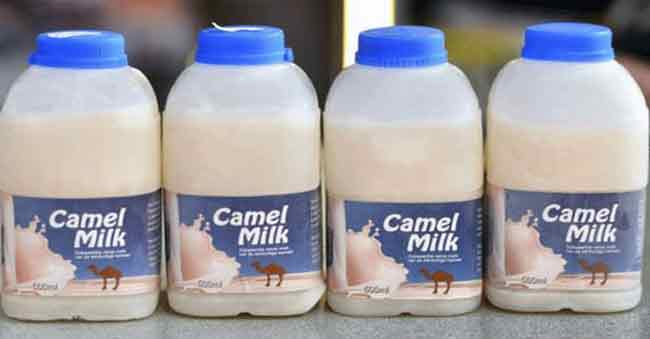Camel Milk Price Rs 3500 a liter in America