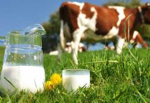 benefits of Cow's milk