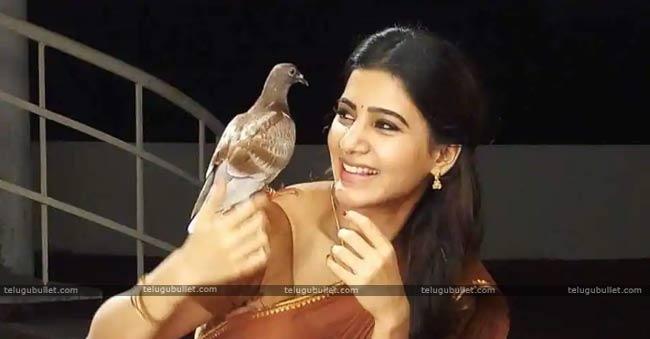 Samantha Navel In Seema Raja Hd: Naga Chaitanya And Samantha Next Film Titled Majili-Telugu