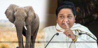 Supreme Court Gave Shock To Mayawati